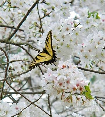 Softness Of Spring Art Print