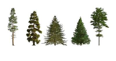 Softwood Trees Art Print by Mikkel Juul Jensen