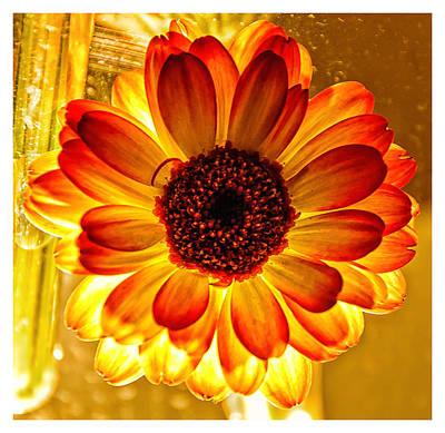 Giuseppe Cristiano Royalty Free Images - Solar Flower Royalty-Free Image by Louis Dallara