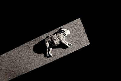 Cute Puppy Photograph - Solar Non-powered by Mike Melnotte