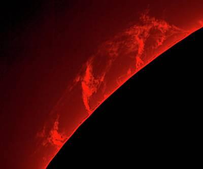 Solar Prominence Photograph - Solar Prominences by Damian Peach