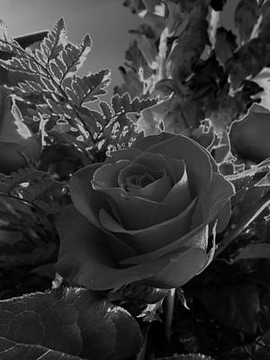 Art Print featuring the photograph Solarized Rose by Scott Kingery