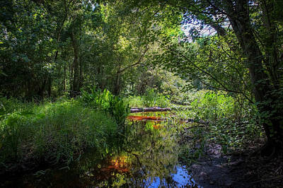 Soldiers Creek Seminole County Florida Environmental Center Along The Florida Trail    Art Print by Rich Franco