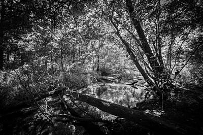 Soldiers Creek Seminole County Florida Environmental Center Along The Florida Trail Bw    Art Print by Rich Franco
