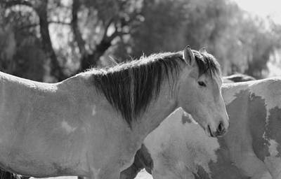 Horse Photograph - Solemn by Rima Biswas