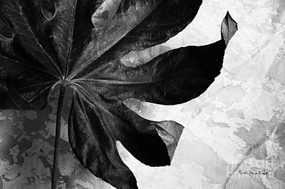 Photograph - Solid by Randi Grace Nilsberg