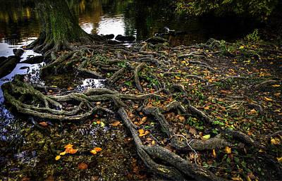 Photograph - Solid Roots by Henrik Petersen