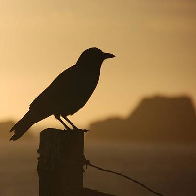 Photograph - Solitary Crow by Eric Tressler
