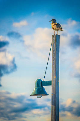 Photograph - Solitary Gull by Chris McKenna