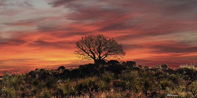 Burning Bush Photograph - Solitary  by Paul Anderson