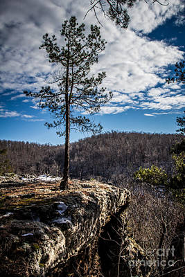 Photograph - Solitary Pine by Jim McCain