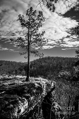 Photograph - Solitary Pine Monochrome by Jim McCain
