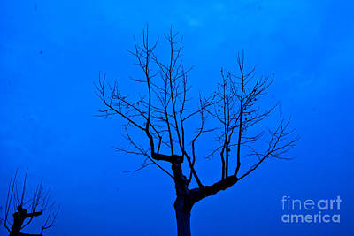 Nature Photograph - Solitary by Pravine Chester