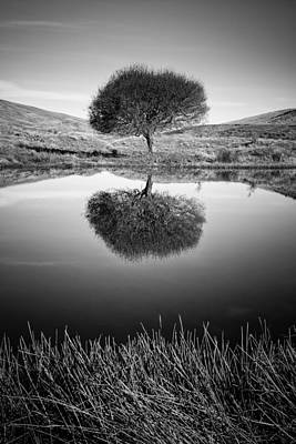 Photograph - Solitary Reflection by Brad Grove