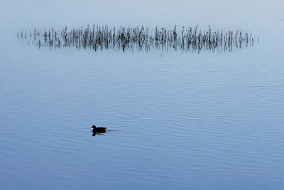 Photograph - Solitary by Robert Woodward