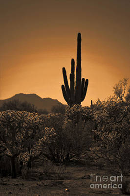 Solitary Saguaro Art Print