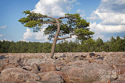 Solitary Tree Amidst Field Of Boulders Art Print by John Stephens