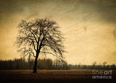 Photograph - Solitary Tree by Bianca Nadeau