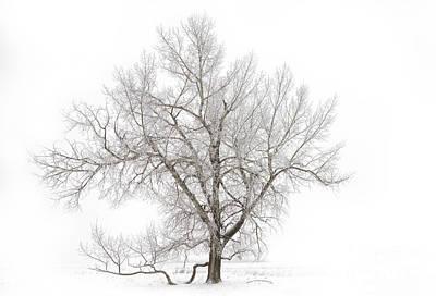 Alberta Landscape Photograph - Solitary Tree by Dan Jurak