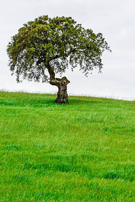 Photograph - Solitary Tree by Edgar Laureano