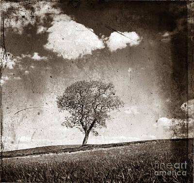 The Trees Photograph - Solitary Tree In Limagne Landscape. Auvergne. France by Bernard Jaubert