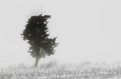 Photograph - Solitary Tree by JT Lewis