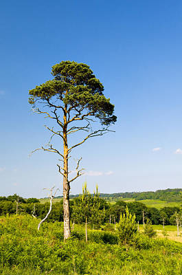 Photograph - Solitary Tree by Mick House