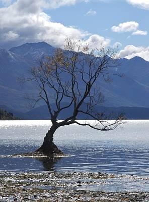 Photograph - Solitary Tree by Paula Guy