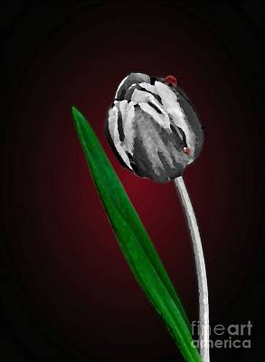 Photograph - Solitary Tulip by Shirley Mangini