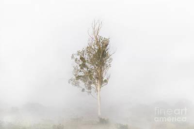 Photograph - Solitude by Bernadett Pusztai