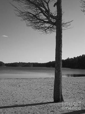 Photograph - Solitude Bw by Barbara Bardzik
