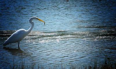 Photograph - Solitude - Egret by Maria Urso