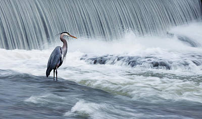 Heron Photograph - Solitude In Stormy Waters by Mircea Costina