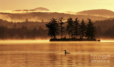 Loon Photograph - Solitude by Jim Block
