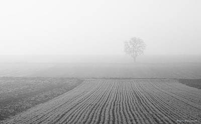 Photograph - Solitude by Miguel Winterpacht