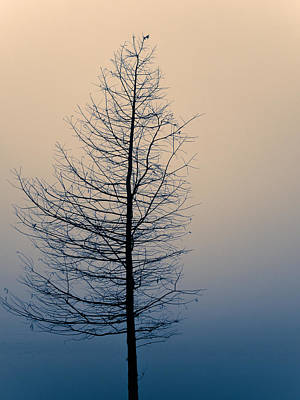 Solitude Original by Mihai Ilie