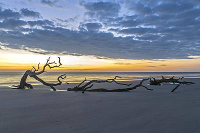 Photograph - Solitude On Driftwood Beach Jekyll Island  by Willie Harper