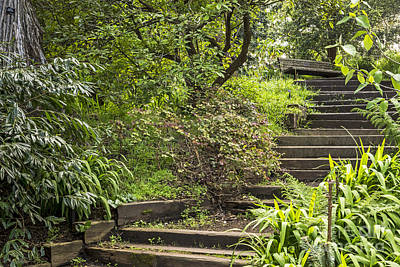 Photograph - Solitude Series Garden Stairs by Kate Brown