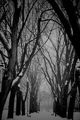 Photograph - Solitude by Valerie Rosen