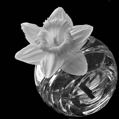 Photograph - Solo Daffodil by Terence Davis