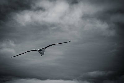 Photograph - Solo Flight by Dave Hall