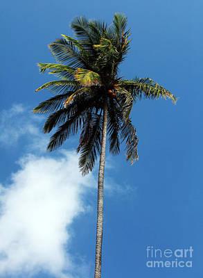 Photograph - Solo Palm by John Rizzuto