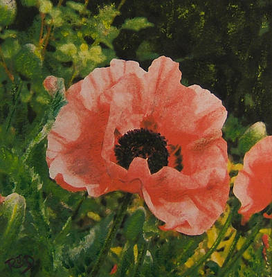 Painting - Solo Poppy by Richard James Digance