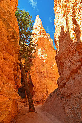 Photograph - Solo Tree - Bryce Canyon by Dana Sohr