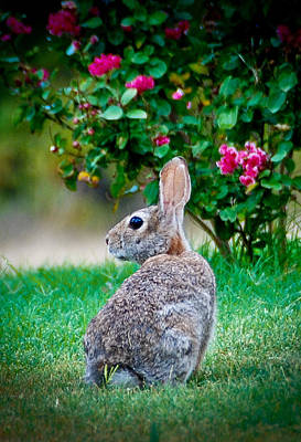 Photograph - Some Bunny Loves You by Dee Dee  Whittle