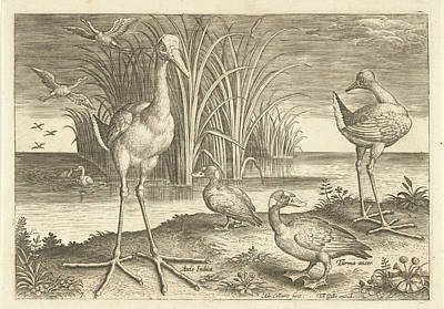 Waterfowl Drawing - Some Waterfowl On A Shore, Adriaen Collaert by Adriaen Collaert