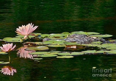 Photograph - Somebody Call The Gator Boys by Kathy Baccari