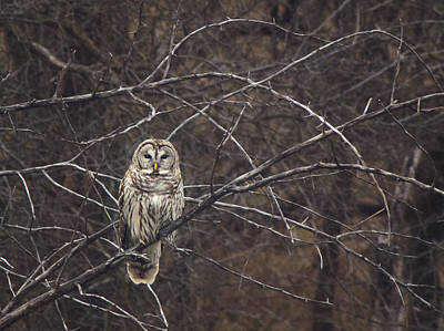 Somebody's Watching Me  Art Print by Kimberly Danner
