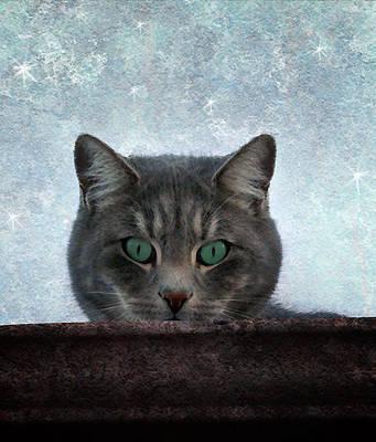 Photograph - Someone's Watching You by Ellen Heaverlo