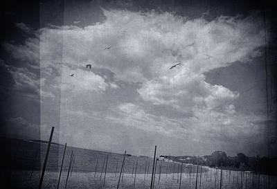 Philosophical Photograph - Something Beautiful by Taylan Apukovska